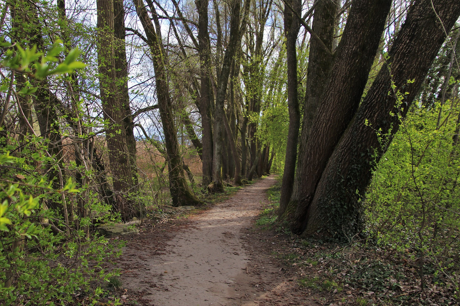 the-path-4101224_1920